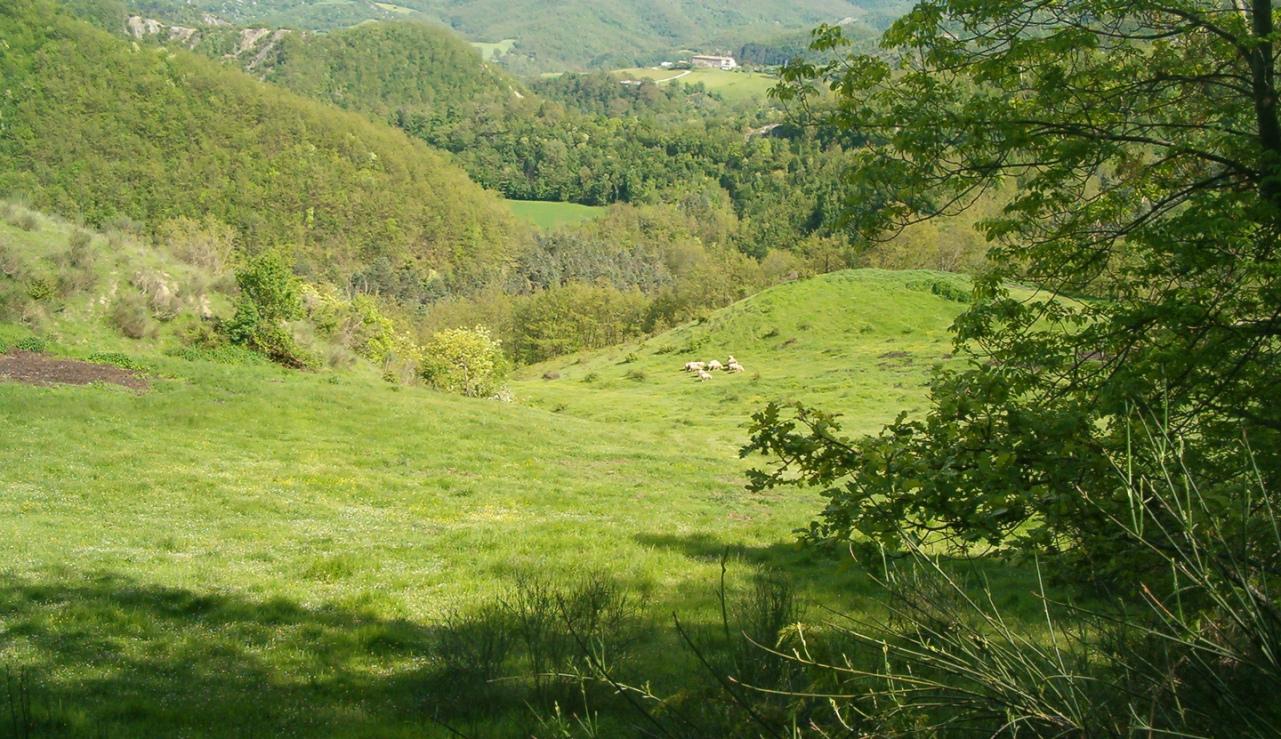 Tolle Landschaft und Natur rund um das Ferienhaus die huegelige Landschaft der Marke in Italien