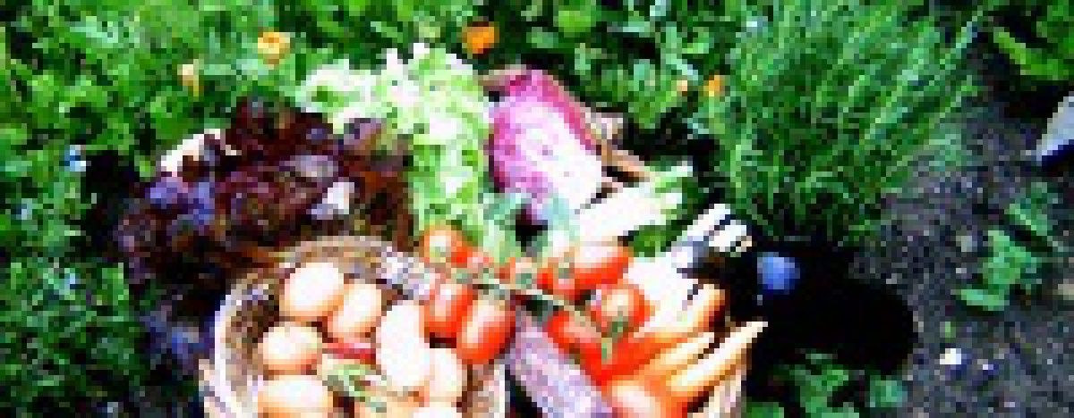 Beim Ferienhaus kannst du frisches Obst und Gemüse kaufen